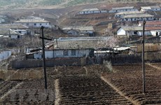 Vietnam helps DPRK natural disaster victims with 5,000 tons of rice
