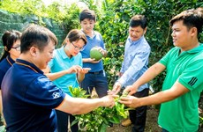 Bayer Agricademy trains fruit, coffee farmers