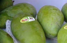 Son La exports more mangoes to UK
