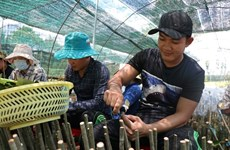 Mekong Delta to have quality breed sources for fishery, fruit and rice