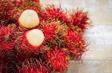 German firm develops bioactives for cosmetics from Vietnam's rambutan