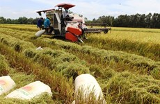 Long An seeks rapid adoption of advanced rice farming techniques