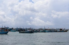 Binh Thuan province sees jump in seafood catch