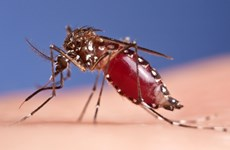 Lao Ministry of Health warns of dengue fever nationwide