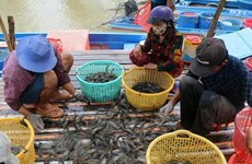 Ca Mau looks to earn 1.2 bln USD from aquatic exports