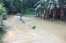 Heavy rains inundate over 900 houses in Cao Bang