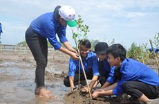 Mangrove forest growing launched in Mekong Delta
