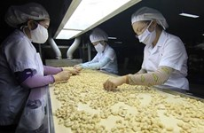 Vietnam's cashew export to China strongly rises