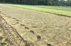 Prime Minister requests urgent actions to cope with drought