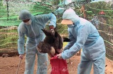 Avian flu breakouts recorded in 11 localities