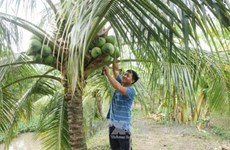 Ben Tre festival promotes coconut industry