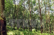 Forestry sector enjoys 4.57 bln USD in 7-month trade surplus