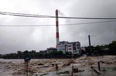 Storm Wipha lands in Quang Ninh, weakens to tropical depression