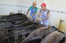Tuna exports to Italy shoot up 60 percent in H1