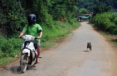 Northern Vietnam reports highest number of death from rabies