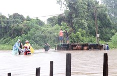 Heavy rain, flooding cause losses in Dak Lak province