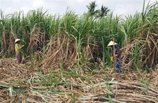 High-tech farming significant to improve sugarcane quality, productivity