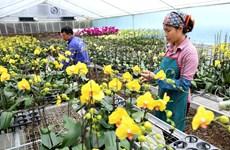 Over 84 percent of Hanoi's communes gain new-style rural area status
