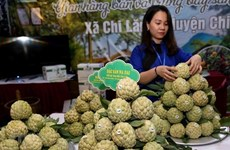 Lang Son promotes local Chi Lang custard-apple in Hanoi
