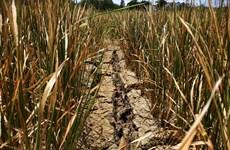 Dak Lak farmers hit by serious drought