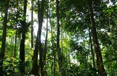 Thailand pilots new forestation plan