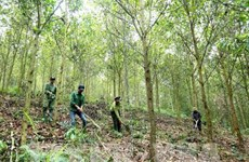 Law enforcement to be intensified to protect forest in Central Highlands