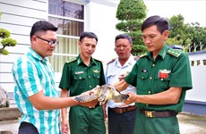 Ba Ria-Vung Tau: Rare sea turtle released into nature