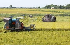 Mekong Delta expects 150,000 more tonnes from summer-autumn rice crop