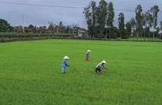 Ca Mau supports agricultural cooperatives