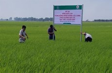 Vietnam to promote exports of organic fertilisers