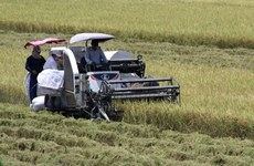 Mekong Delta summer- autumn rice output to go up slightly: authorities