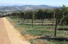 South African company to export fresh grape to Vietnam