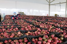 Central Highlands' largest fruit, vegetable processing centre opened