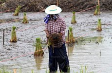 Thailand to announce economic stimulus packages for farmers