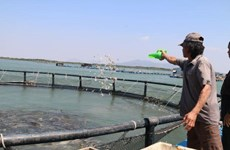Time to tap ocean aquaculture potential: experts