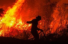 Forest fires in Indonesia raise global warming concerns