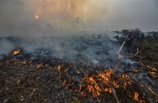 Indonesia: Forest fires break out on Malaysian-controlled land