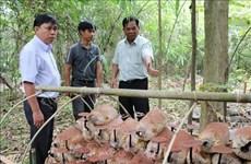 Genome of rare Linhzhi mushroom conserved