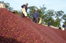 Vietnam's coffee exports plummet in eight months