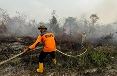 Indonesia closes plantation companies, schools due to wildfires