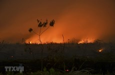 Indonesia: schools closed due to smoke from forest fires