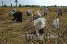 Thailand needs 100 billion THB to support rural economy