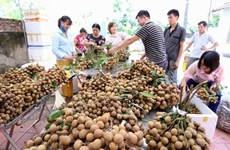 Vietnam focuses on fruit exports for higher value