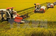 Can Tho leads Mekong Delta region in rural development