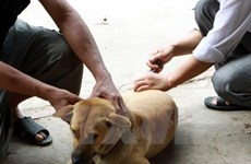 Hanoi meeting responds to World Rabies Day