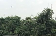 Hai Duong works to preserve Stork Island