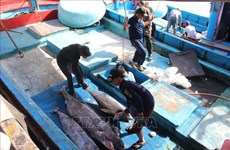 Value chains help Vietnamese tuna become more competitive