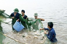 Vinh Phuc: aquaculture output up nearly 5 percent