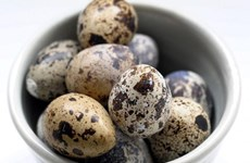 Singapore suspends quail egg imports from Malaysia