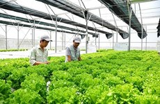 Japanese firms increase investment in Vietnam's agriculture